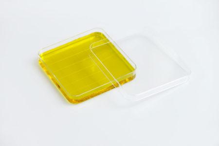 Petri Dish Square